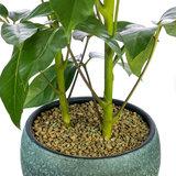 Kamerplant opgepot met Zeoponic