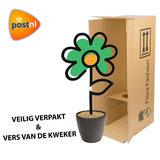 Plant in plantendoos