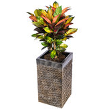 Luxe plantenbak vierkant met Iceton