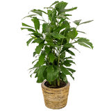 Drypot Rattan Round Grey plantenbak