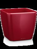 Lechuza Quadro Red