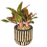 Houten plantpot