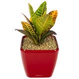 Sierpot kamerplant rood