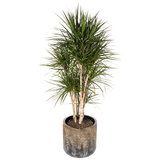 BAQ plantenbak luxe