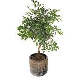 Kamerplant in luxe plantenbak