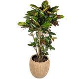 Luxe plantenbak met Croton