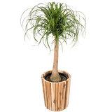 Luxe plantenbak hout