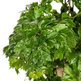 Groene bladeren kamerplant