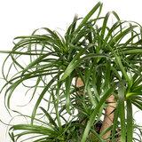 Groene kamerplant