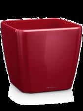 Lechuza Quadro Red D:22 cm H:20 cm